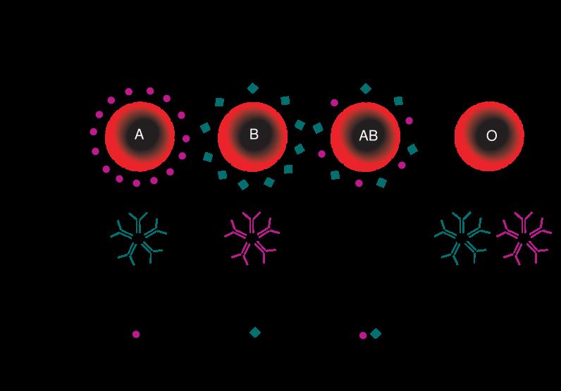 comment trouver le groupe sanguin mps